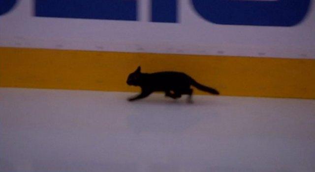 San Jose Sharks name stray cat that ran on ice after team captain Joe Pavelski