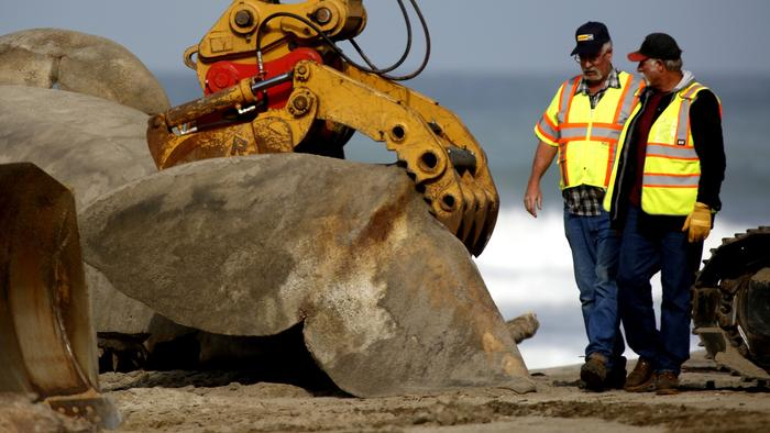 After removing the rotting whale carcass from beach, crews decontaminate sand