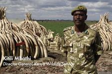"""Watch: WildAid """"#JoinTheHerd"""" by @GreyLondon https://t.co/MLH78F5adD https://t.co/s3KEuUi4SW"""