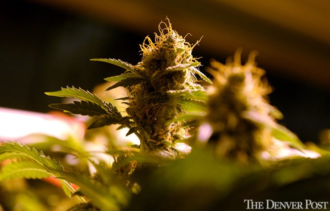 Historic Vermont marijuana legalization bill dies in House