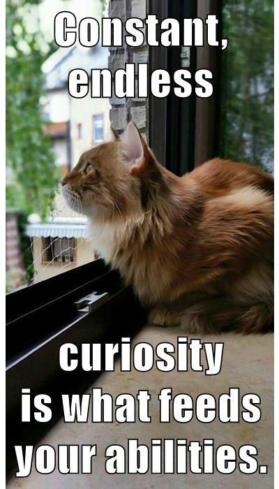 A new #growthmindset cat! Constant, endless curiosity feeds your abilities https://t.co/vUxYgMyxx7 #MindsetPlay :-) https://t.co/btb0ZEriwf