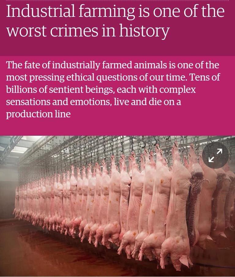 La ganadería industrial es uno de los peores crímenes de la historia