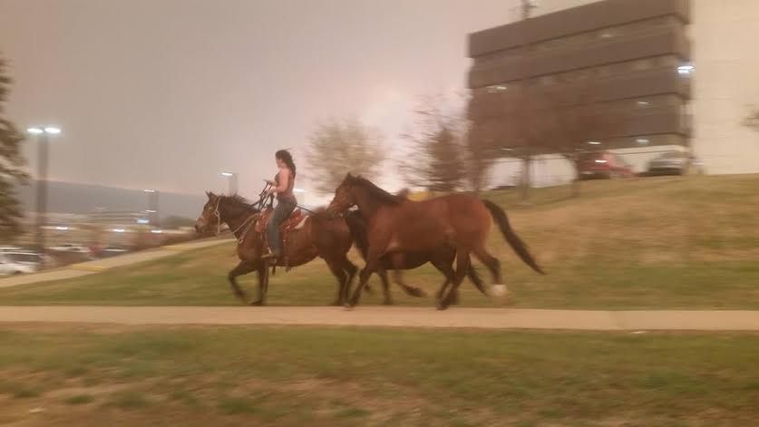 The surreal picture Julie Lodge, from Catalina, snapped of woman fleeing with horses near Fort Mac hospital. #cbcnl https://t.co/PKukcGlZMV