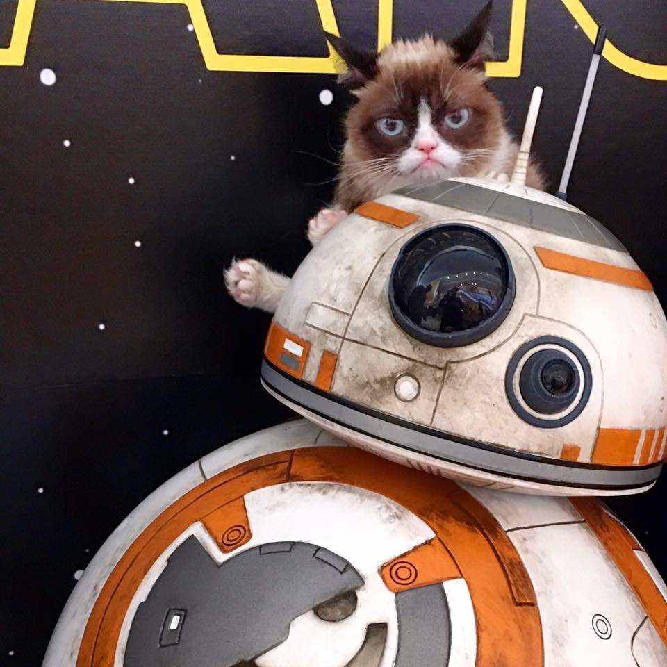 May The 4th Be With You Cat: Grumpy Cat (@RealGrumpyCat)