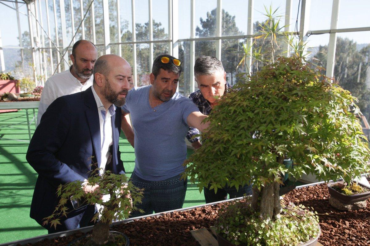#VÍDEO Medio cento de bonsais xa están dispoñibles no botánico de Montealegre ow.ly/4nqHjC