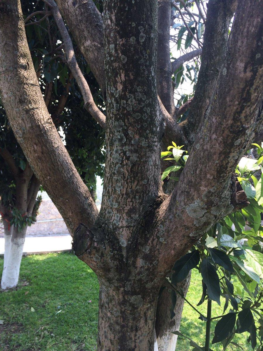 Cuando fumigar los arboles frutales best cultivo y cuidados bsicos del cerezo arboles frutales - Cuando plantar frutales ...