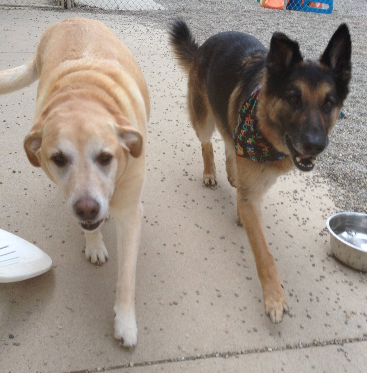 Molly and Koda stroll in for a close up