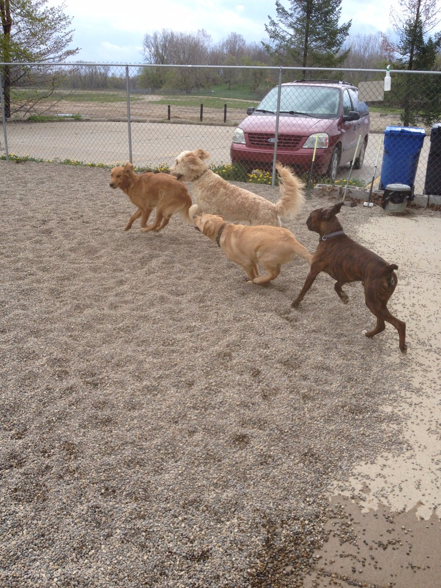 Dozer, Gryffin, Clancy and Maggie Mae are off and running!