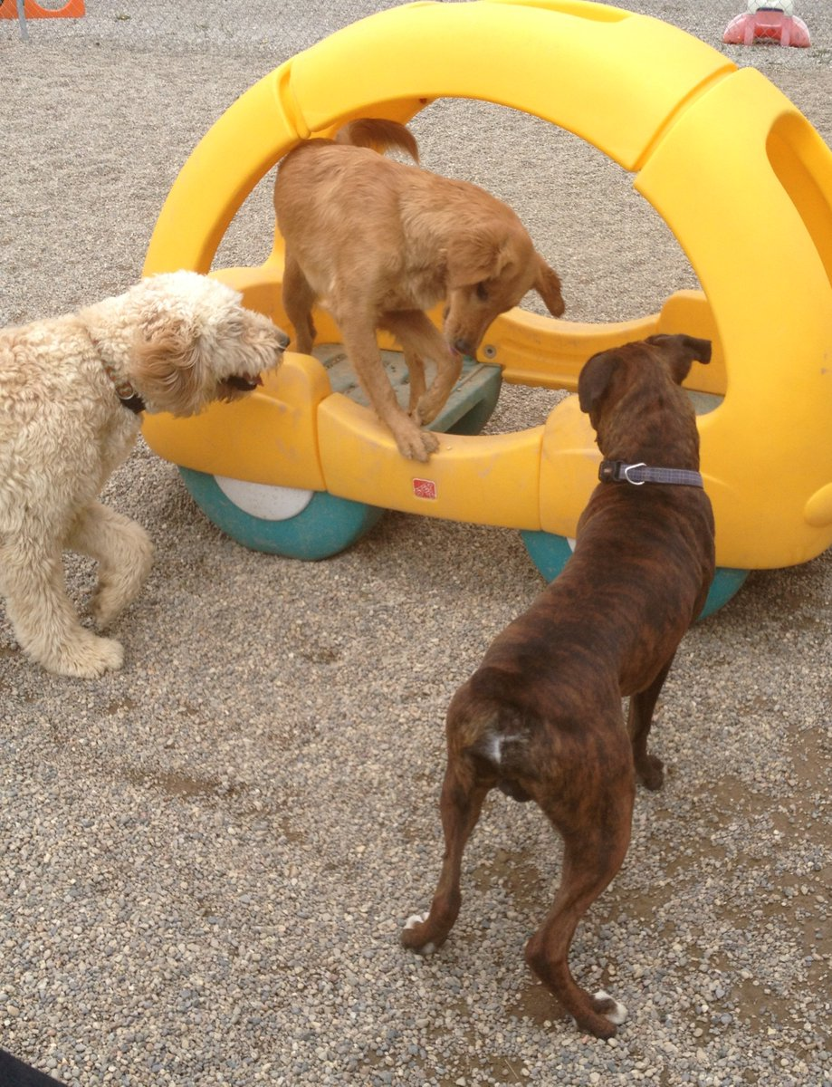 Dozer and Clancy asks Maggie Mae to come and play