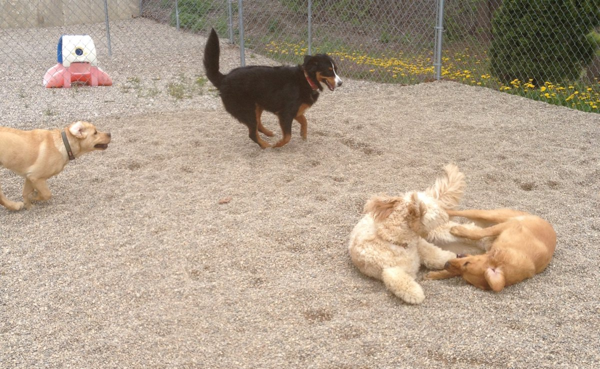 Gryffin races after Zooey as Maggie Mae and Clancy wrestle