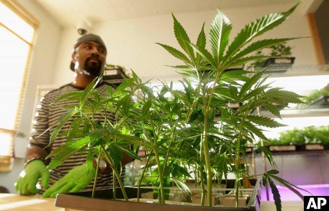 Feds drop forfeiture case against Harborside, California's biggest dispensary