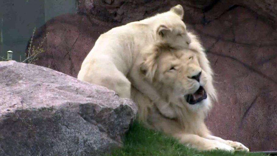 Mother's Day, the animal way at @TheTorontoZoo