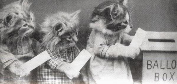 Image result for animals voting