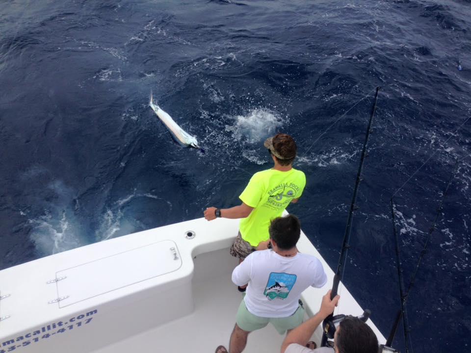 Charleston, SC - Wadmacallit released 3 Sailfish.
