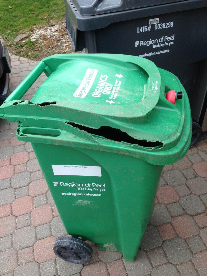 680 News Toronto On Twitter City Council Is Preparing For Backlash To Its New Supposedly Raccoon Proof Green Bin Https T Co X1cl3hhtoy