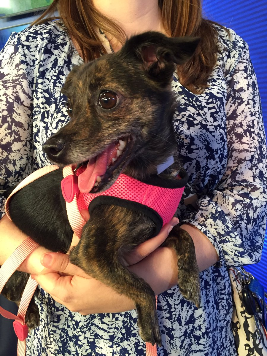 The star of the hour, Bridgette, is here! Tune into First Coast Living to hear her story!