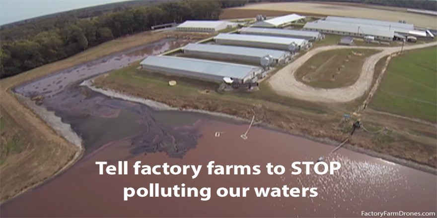 Corporate agribusinesses are polluting our #water. #ProtectCleanWater from #FactoryFarms at https://t.co/TxKJLyKrgE. https://t.co/evG7mRPOE0