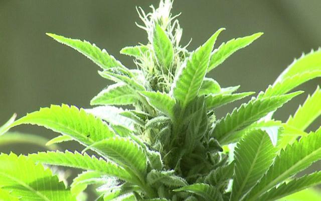 CO Passes Law Allowing Medical Marijuana in Schools