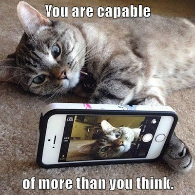 a #growthmindset cat explores technology! You're capable of more than you think https://t.co/0s9azYaxf2 #MindsetPlay https://t.co/57nIt6O65f
