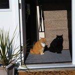 影にしか見えない黒猫これは気づかない