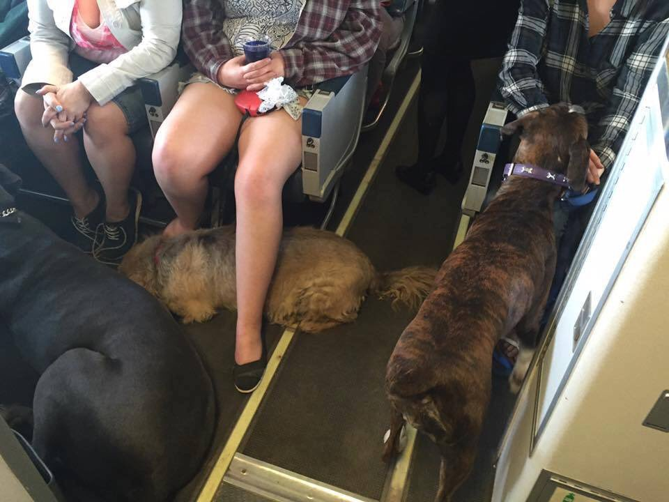 .@WestJet doing it right! Allowing pets onboard as Ft. McMurray residents flee to other cities. #ymmfire #FTW https://t.co/TlIeHKuLE7