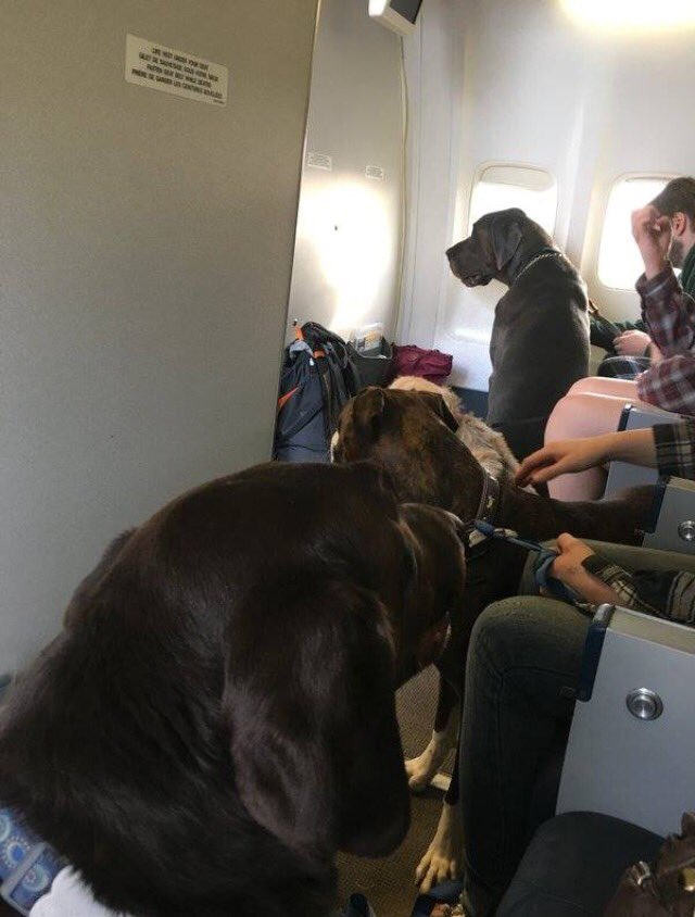 Thumbnail for Airlines Allow Canadian Fire Evacuees to Fly With Pets