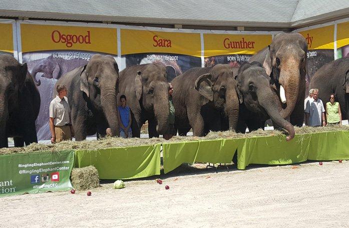 Ringling retires elephants to Polk City