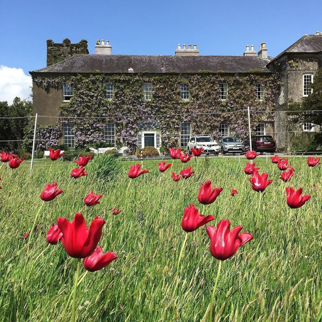 This weekend @ballymaloe_house is the centre of the food universe @litfestie #litfest16 Pi… https://t.co/knqBAAkOJs