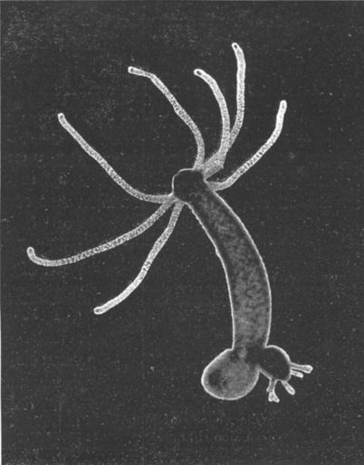 A hydra can fire neurotoxic darts at an acceleration of 500,000m/s^2. That's 27x escape velocity. https://t.co/sypaabEH4X