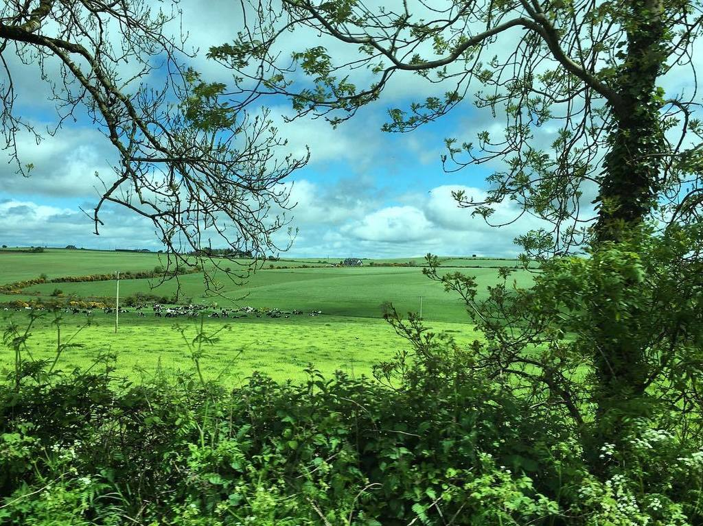 View from the bus: beautiful Irish countryside. #kerrygoldadventures #ireland #countycork #pasture #grass #scenery https://t.co/PCyGcBzctc