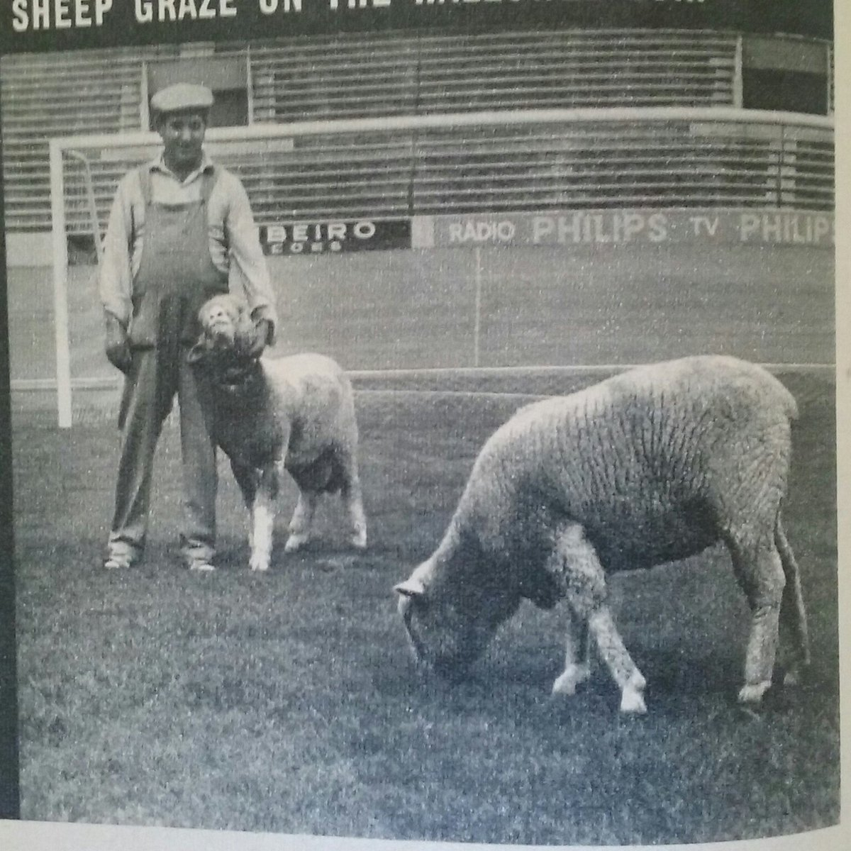 Sporting's 2,500 trophies and groundsman/shepherd in 1968. https://t.co/yBXWCSvdSL