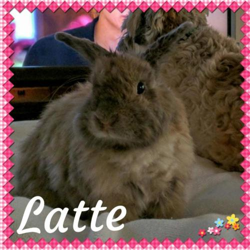 Adoptable Buns On Twitter Latte Is A Friendly Adult