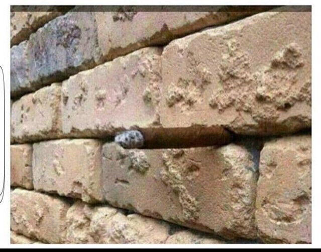 The Optical Illusion Is A Cigar I Don T Care If Spoiled It Retweet To Save Everyone Their Precious Timepic Twitter Cbstu3hmej