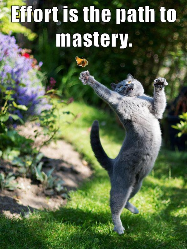 Mastery begins with #growthmindset: Effort is the path to mastery. More cats: https://t.co/p3xqtD2ZCV #MindsetPlay https://t.co/hndRbVd2x4