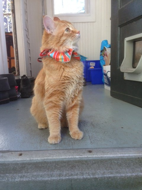 Lost cat: Fairfield #YYJ if you see Pete please contact me https://t.co/DZHn1NpE5C