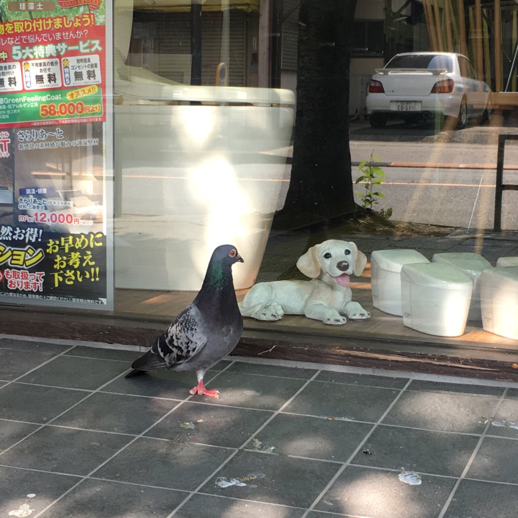 まだ鳩が置物の犬を見ていた〜。  #多摩市 #聖蹟桜ケ丘 #鳩 #犬 https://t.co/PQqe9oS5Tn