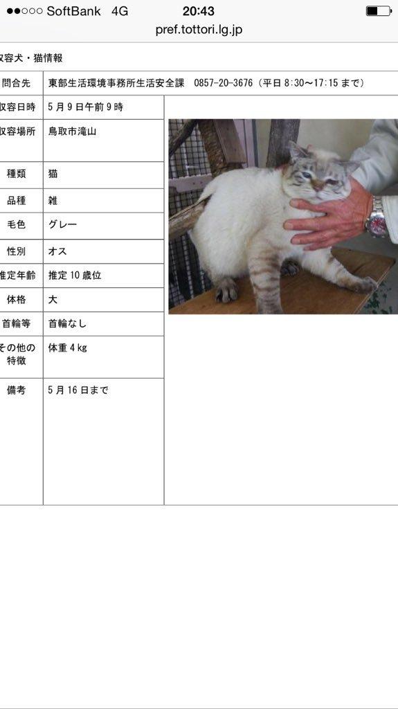 【#鳥取県東部】5/9 #鳥取市滝山  高齢猫 10才位 シャムミックス ♂ 首輪なし ※5/16 掲載期限  お散歩に出かけてお家に帰れなくなりました(>_<)このニャンがお迎えを待っていますよ! #迷い猫 #迷子猫 #拡散希望 https://t.co/lgSzcfTc0q
