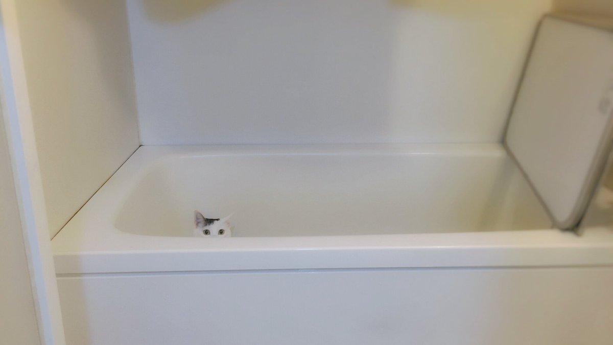 バスタブの奥を覗く時、私もまた覗かれている。(風呂掃除) https://t.co/BGDL9RVVG0