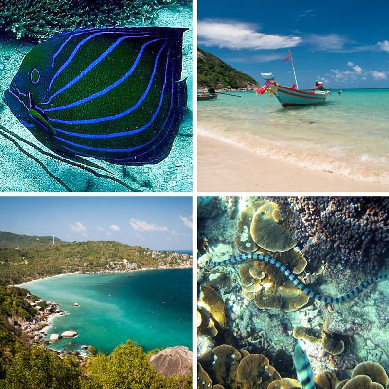 #Thailand's #KohTao is a great place for diving and snorkelling enthusiasts. #ThailandTravel #Travel #WaterSports https://t.co/LNoTcPvAmP