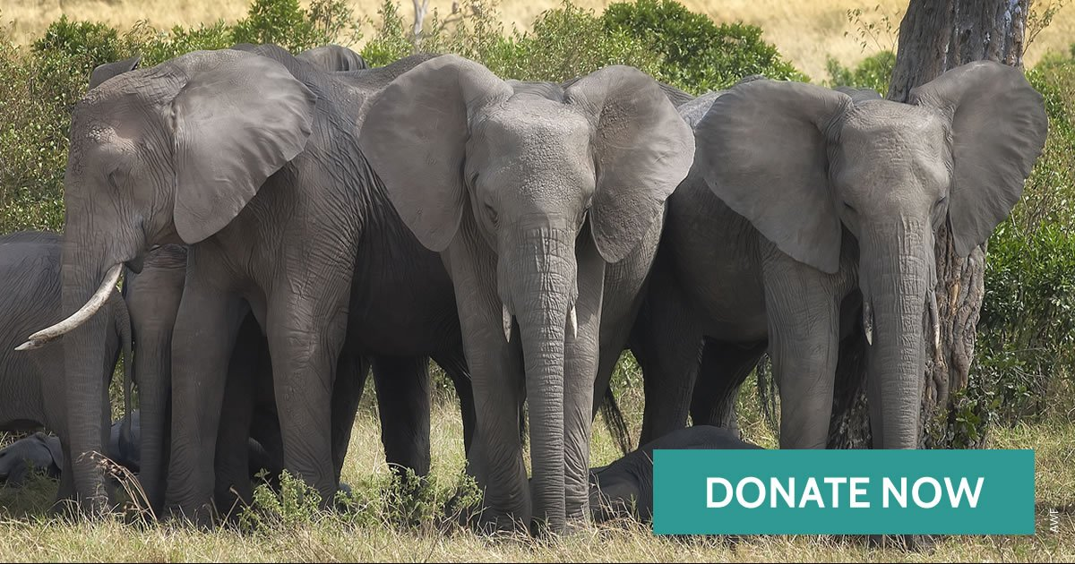 An elephant should never be killed for its ivory. Help protect Africa's wildlife: https://t.co/yWBZLSw43N https://t.co/FeWMk17m6R