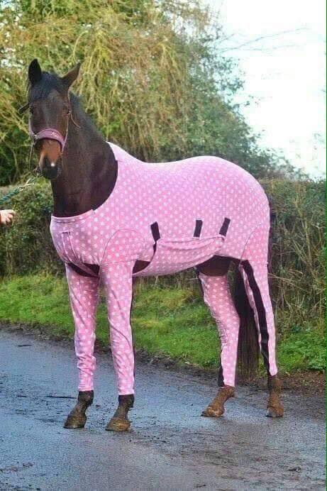 um cavalo de pijama rosa esta passando pela sua timeline e nao ha nada q voce possa fazer a nao ser aceitar https://t.co/2FoLUzFpsC