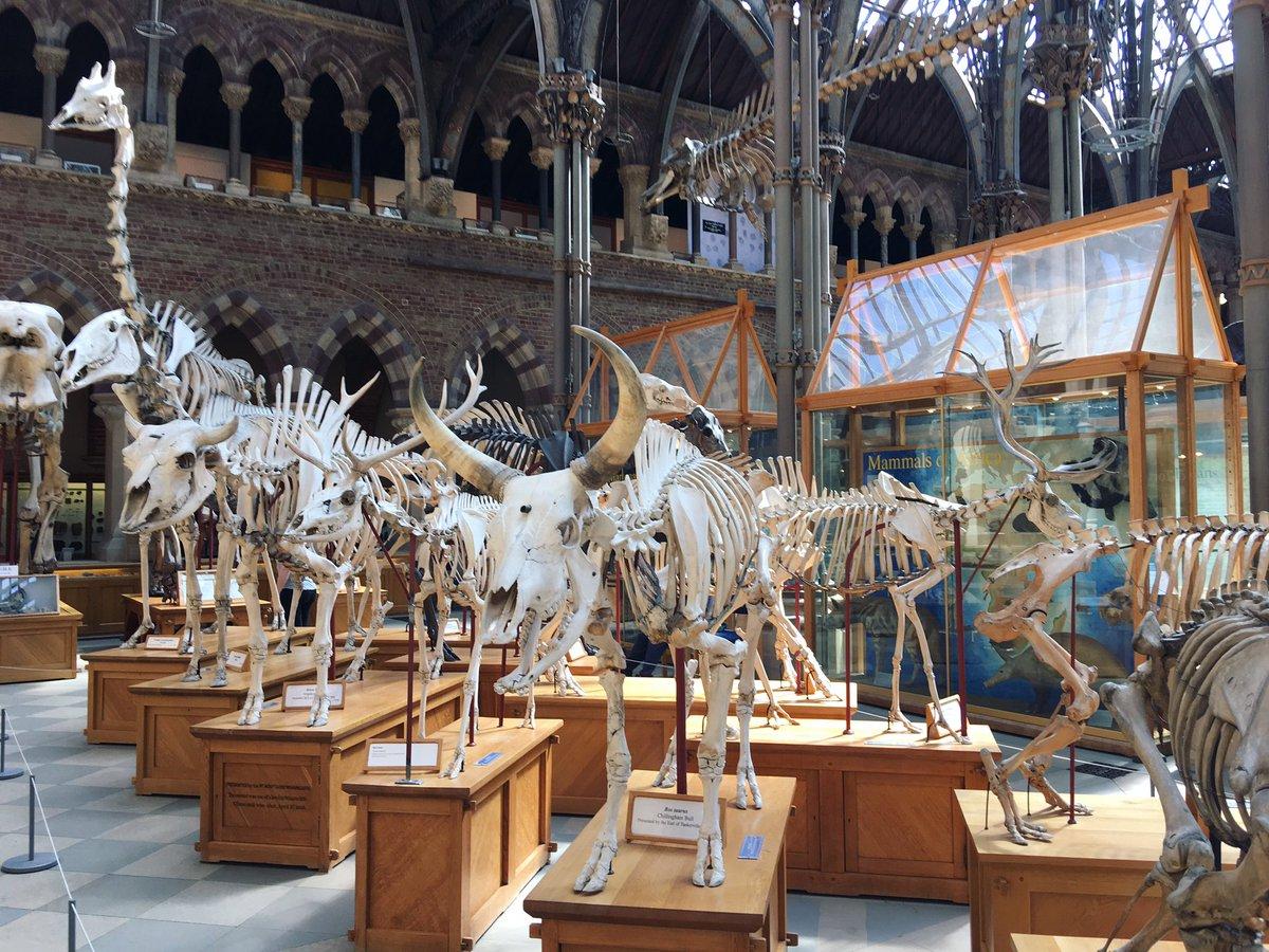 骨!骨!剥製!骨!ホルマリン漬!標本!骨!石!って感じで良かったな〜 ダブリンかベルファストにある自然史博物館もかなり良かった記憶あるのでそっちもまた行きたい https://t.co/mUTFRdFHva