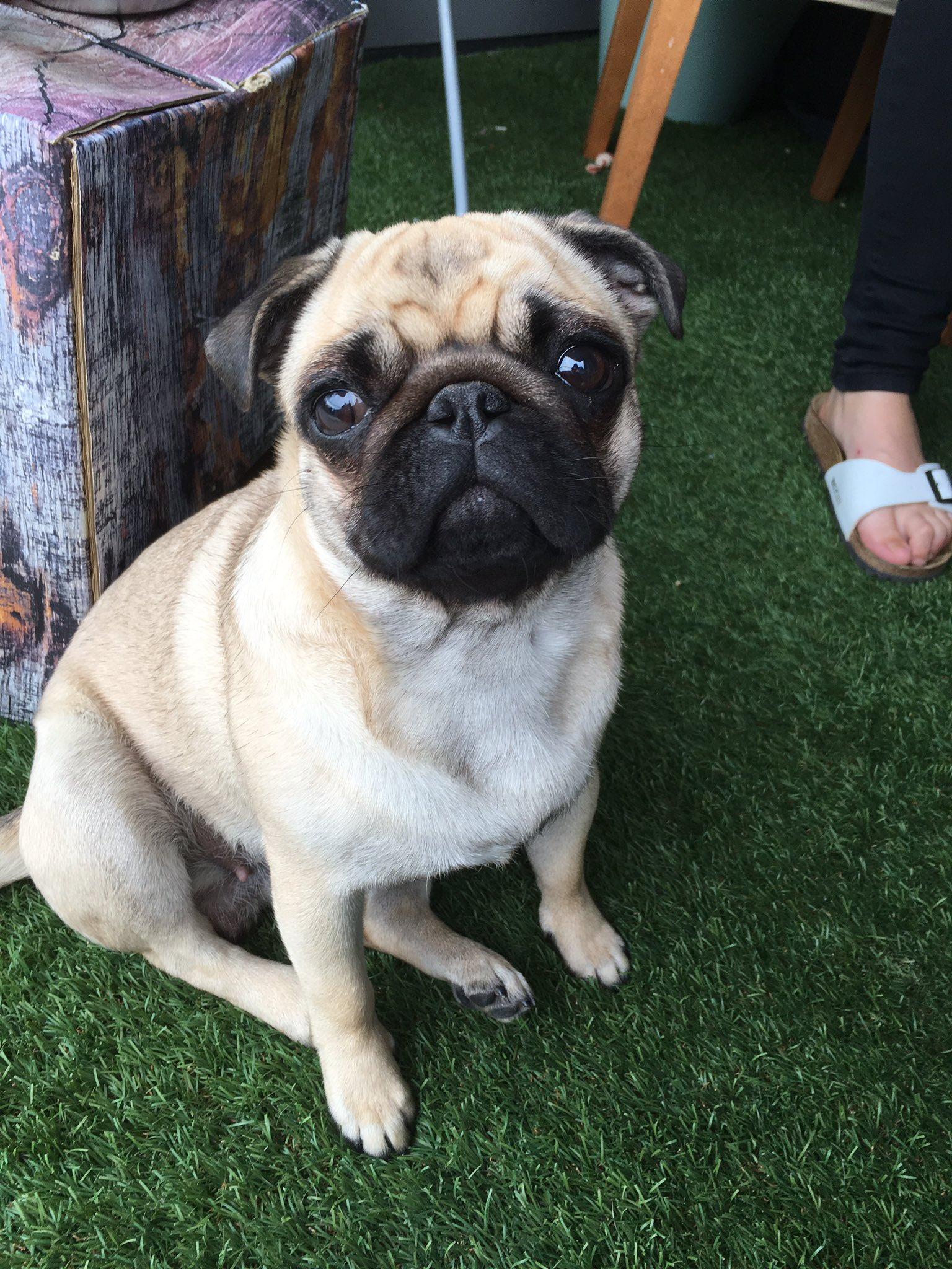 """Enzo Knol on Twitter: """"Dit is pip. De hond van @MilanKnol ..."""