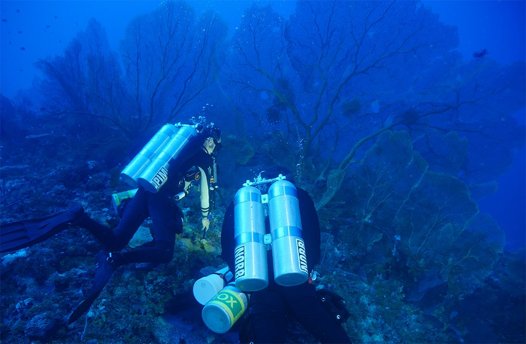 Heading off tomorrow to resurvey our #mesophotic sites in the northern Coral Sea and #GreatBarrierReef @GCITweet https://t.co/uOZT8wHVM3