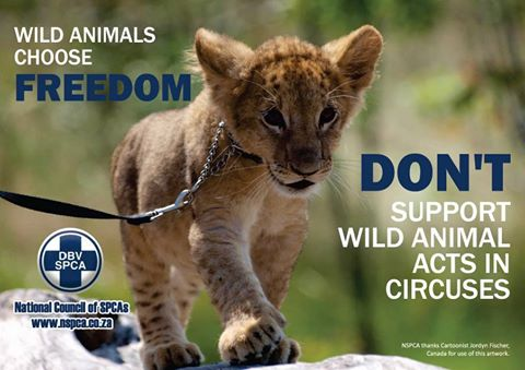 We believe #wildlife should be #free https://t.co/5gsQ144XEE