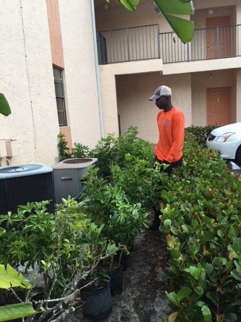 #ComercialProperty Installing Green Trinette Plant, Cocoplum Plant and mulch. #lawnservice  http://www. gcsdevelopmentgroup.com  &nbsp;  <br>http://pic.twitter.com/CWtjezRyGa