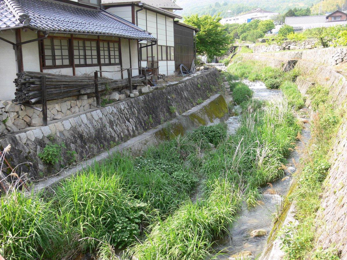 おはようございます(^o^) 今朝は久々、爽やかな朝日🙌 今日もよろしくお願いします♪  流れる沢の中に、草や花が咲いています。これが沢山の虫達を育む命綱☆