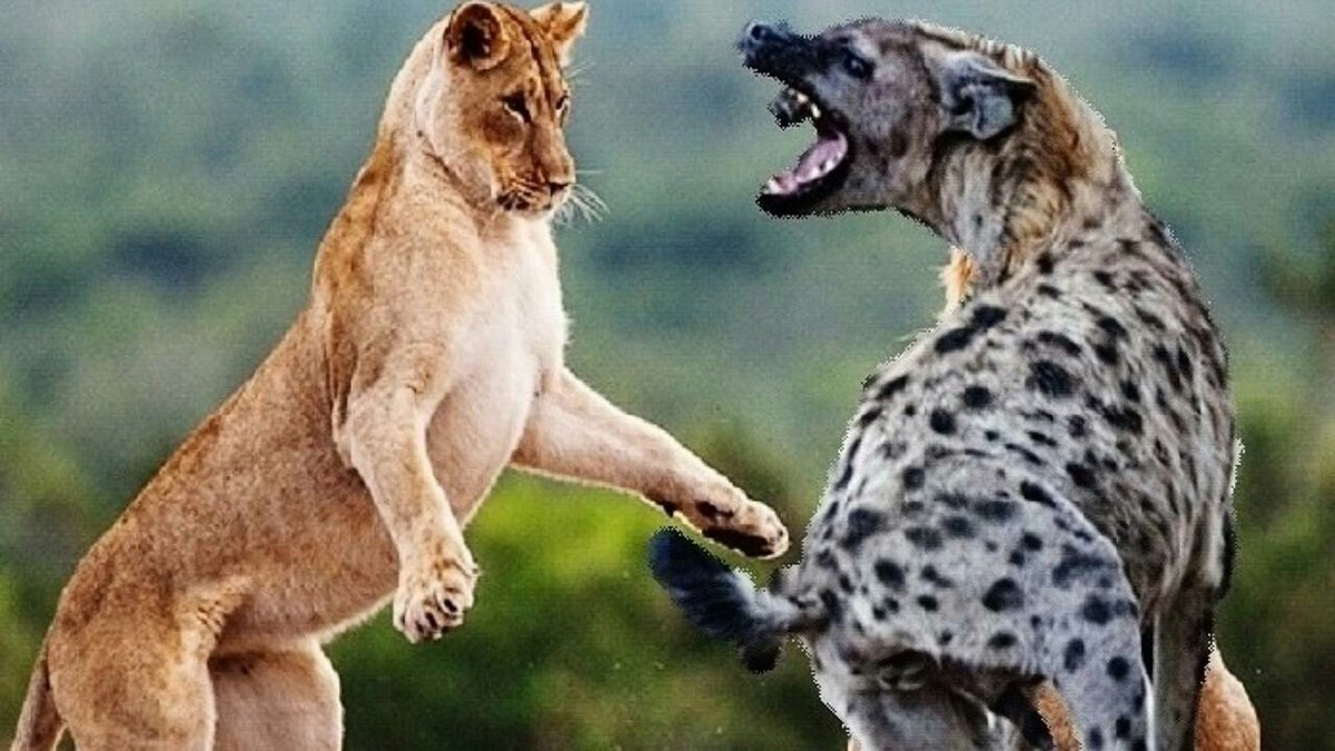 A hyena will bully other animals all day. When a lion arrives, the hyena will be the first to demand fairness. https://t.co/trOc1X70l8