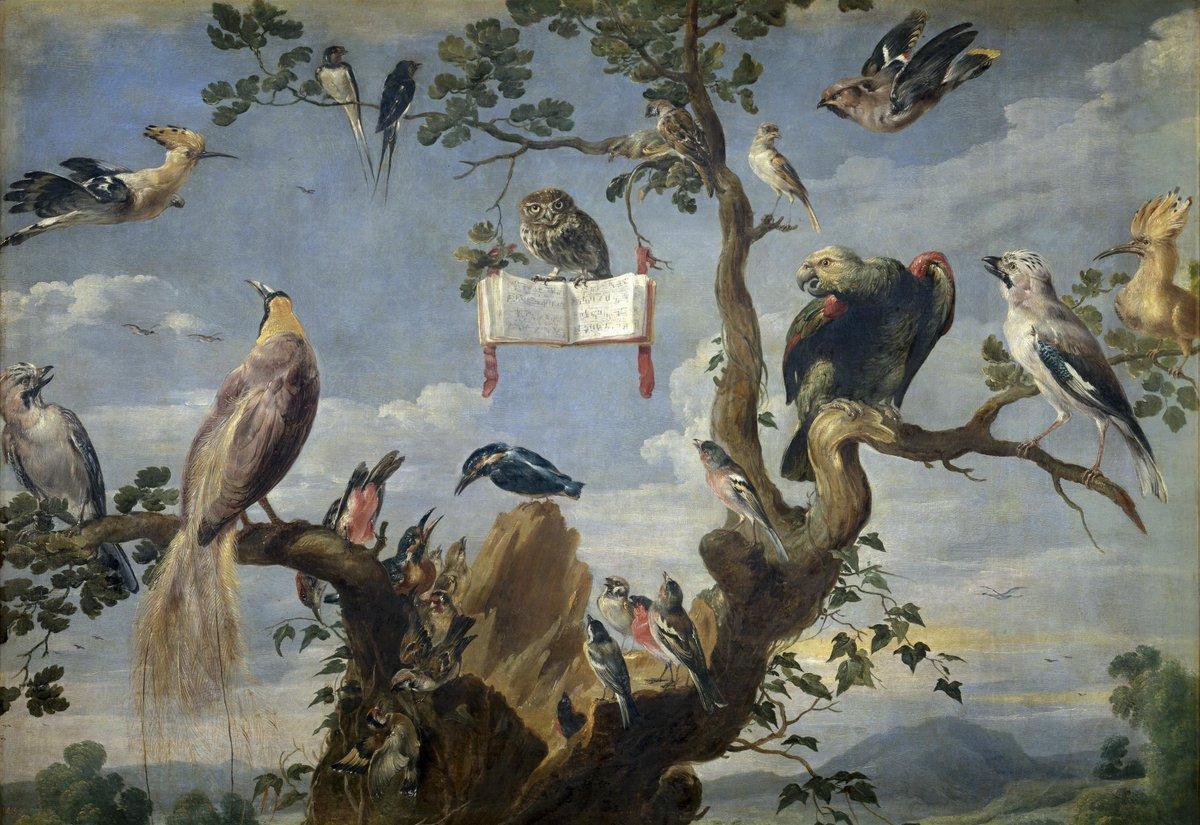 """Thumbnail for #AvesDelPrado """"Concierto de aves"""""""