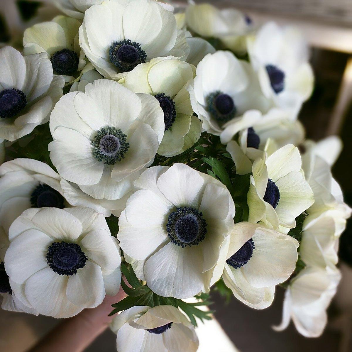 Flower Duet flowerduet